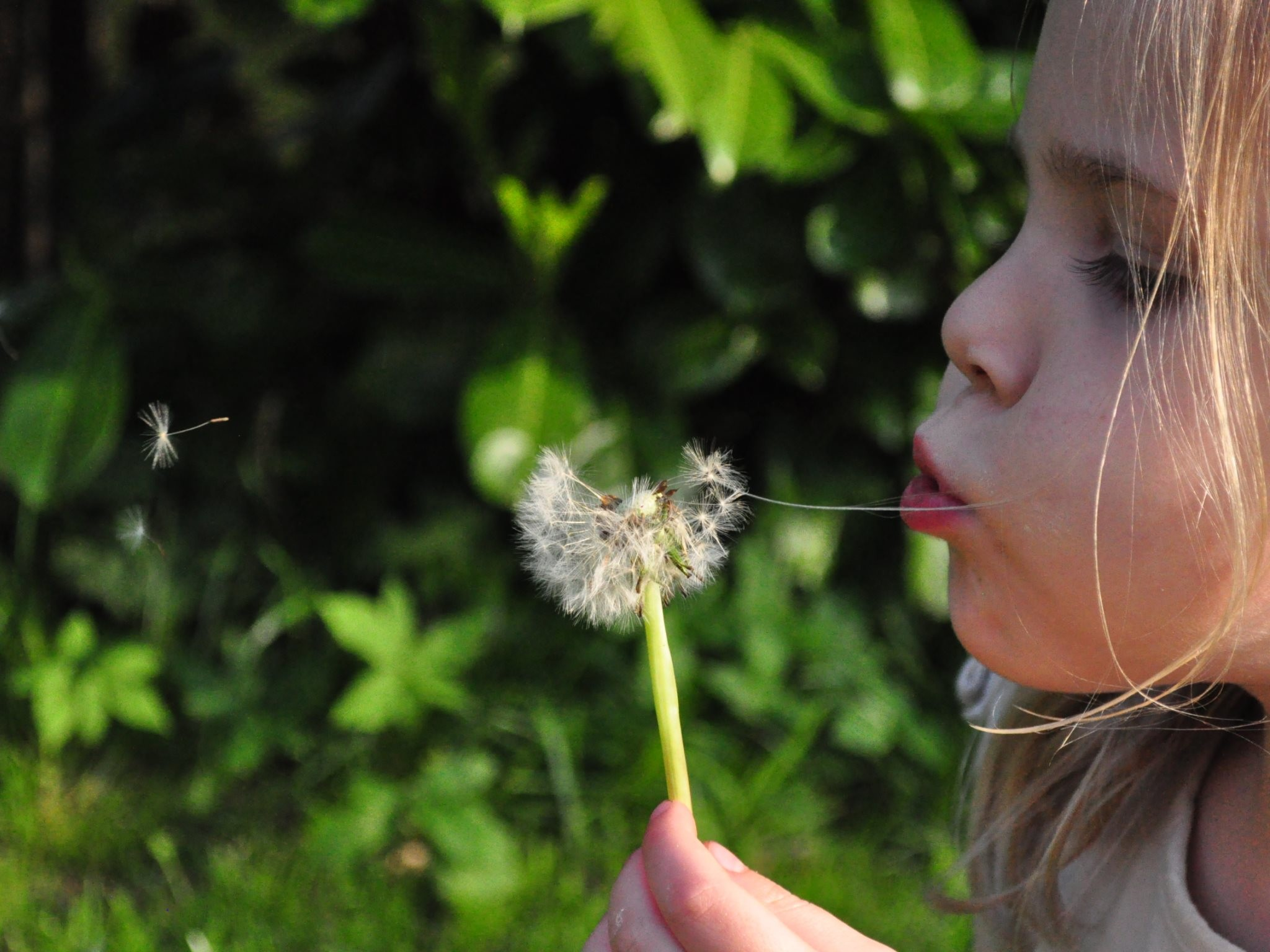 4K HD Wallpaper: Little Girl Blowing Dandelion
