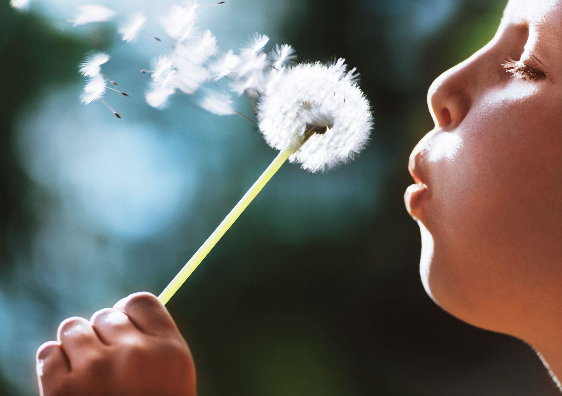 child-boy-blowing-dandelion-plant