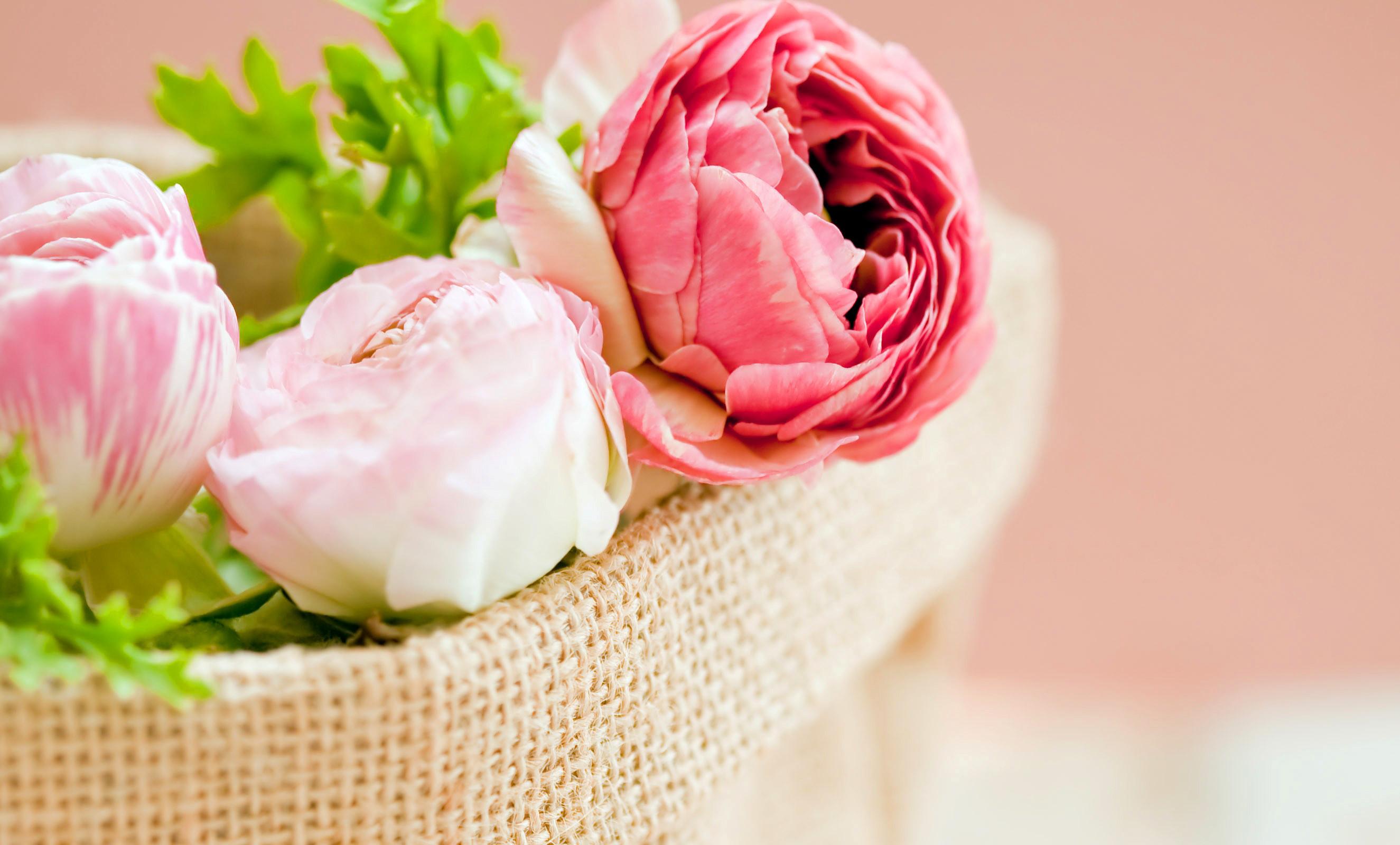 Peonies Pink color Flowers bokeh wallpaper | .