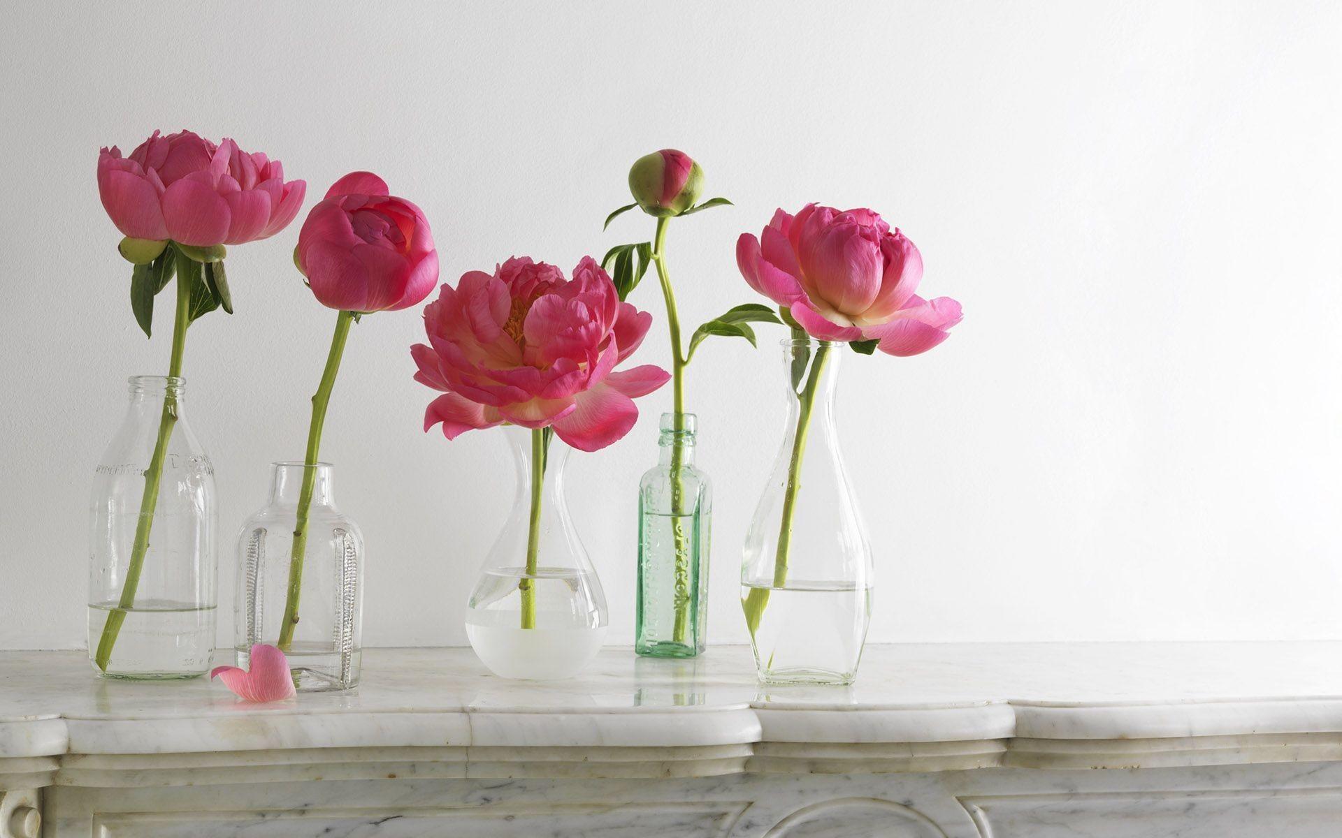 … Peonies in the vase
