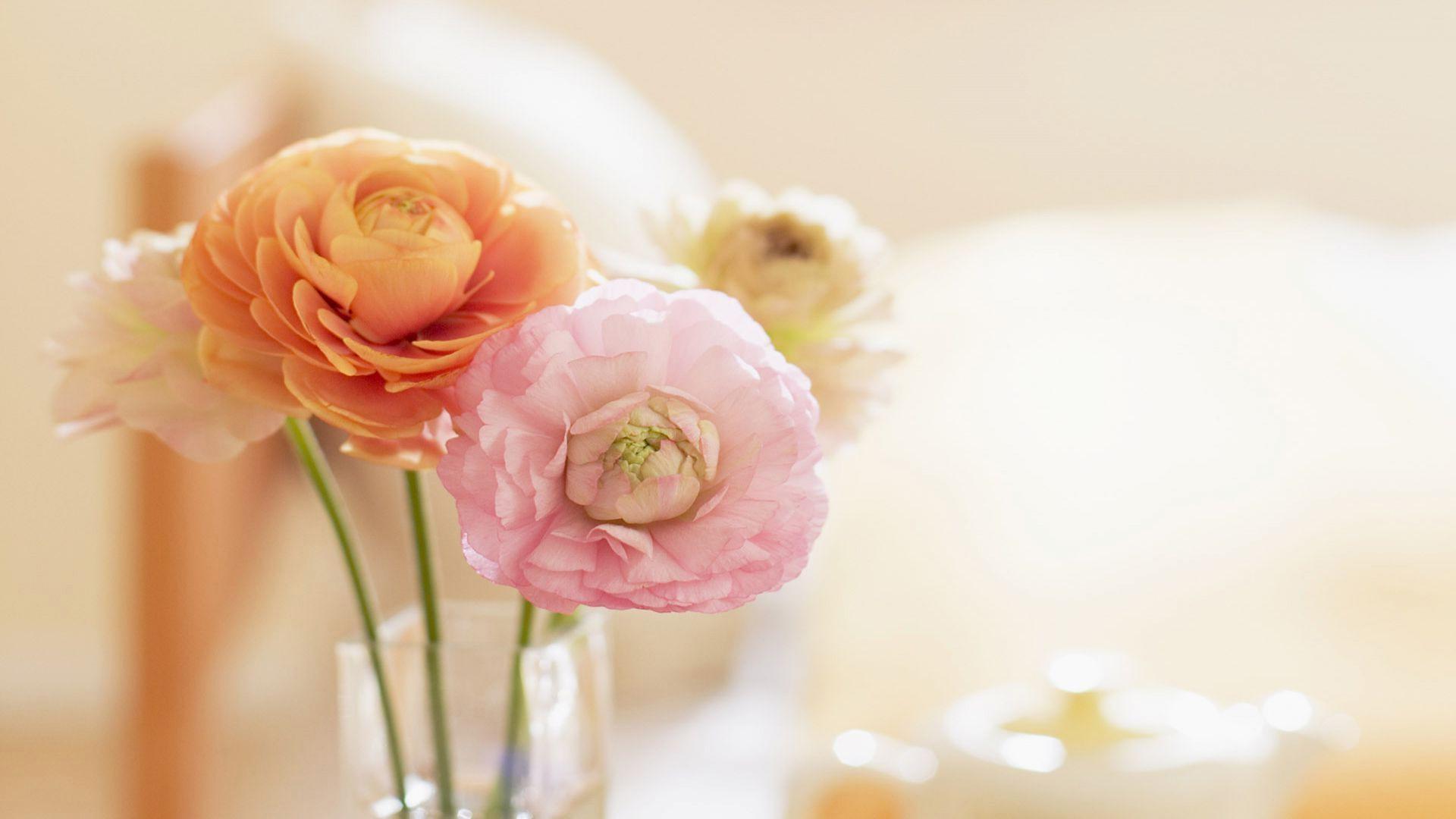 10. peony-flowers-wallpaper10-600×338