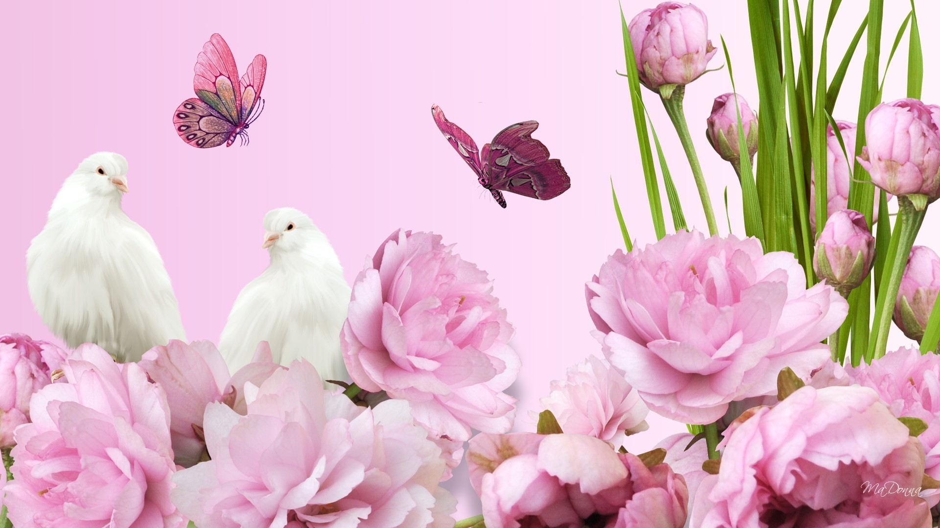 Pink Tag – Peaceful Flowers Doves Bright Spring Peonies Pink Lush Summer  Pigeon Fragrant Graceful Aroma
