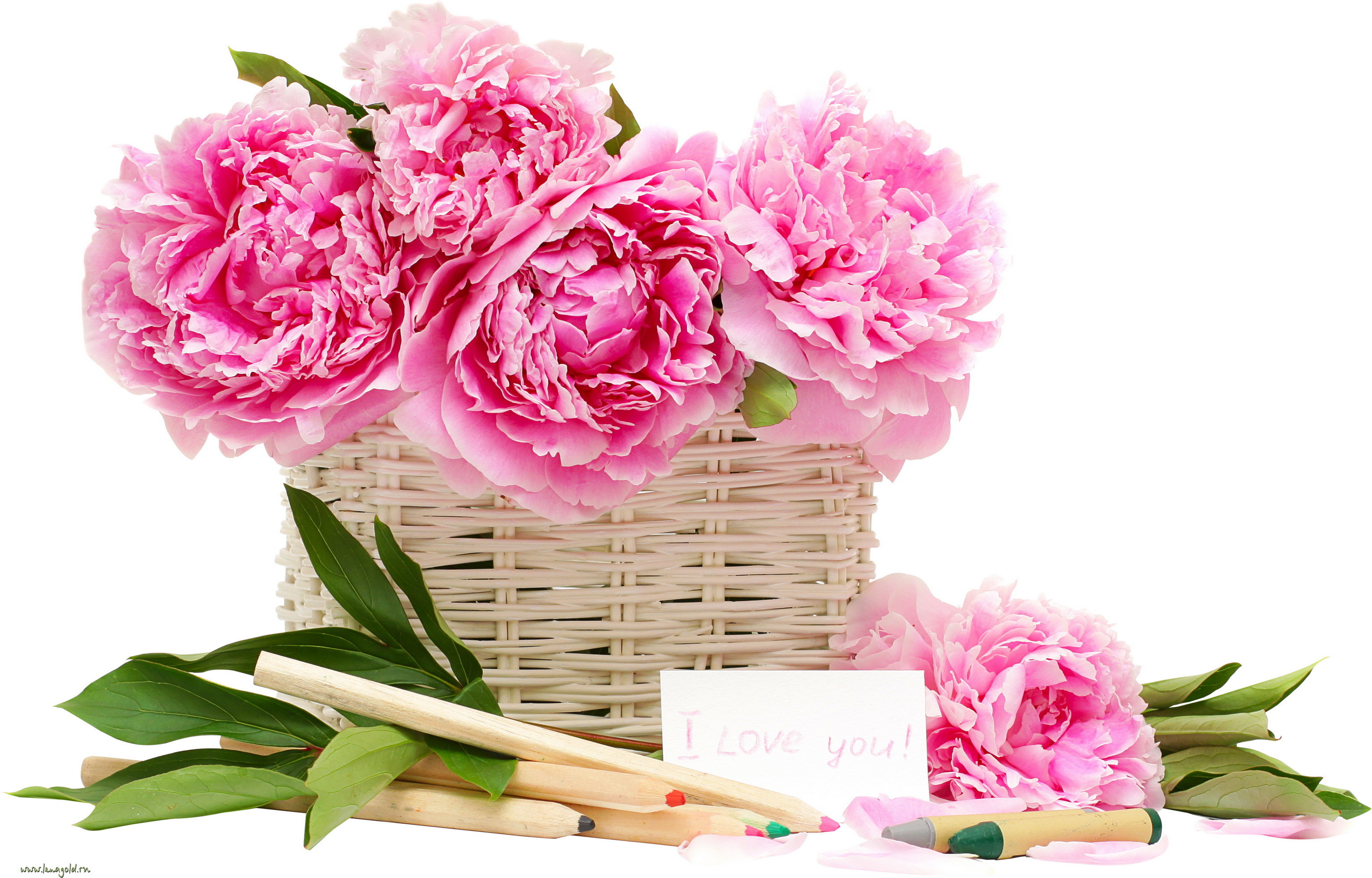 Beautiful drawing flowers peonies