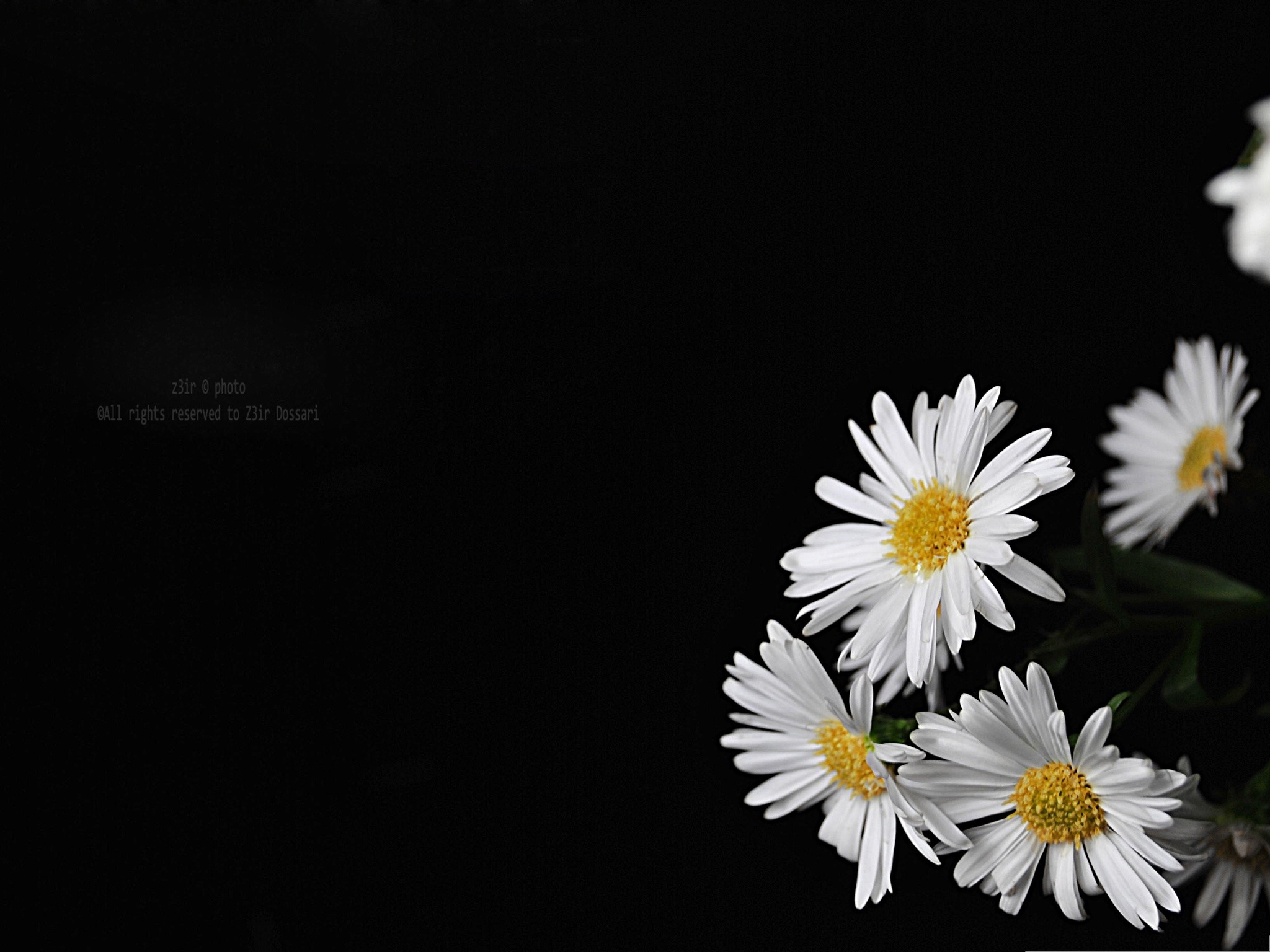Flowers-Picture-Blooming-Little-Flowers-Put-Against .