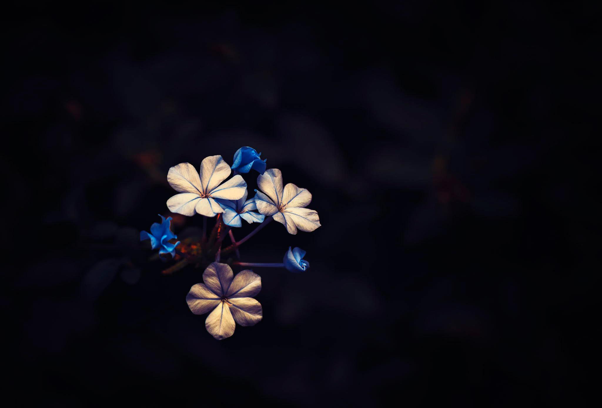 73 Flowers On Black Background