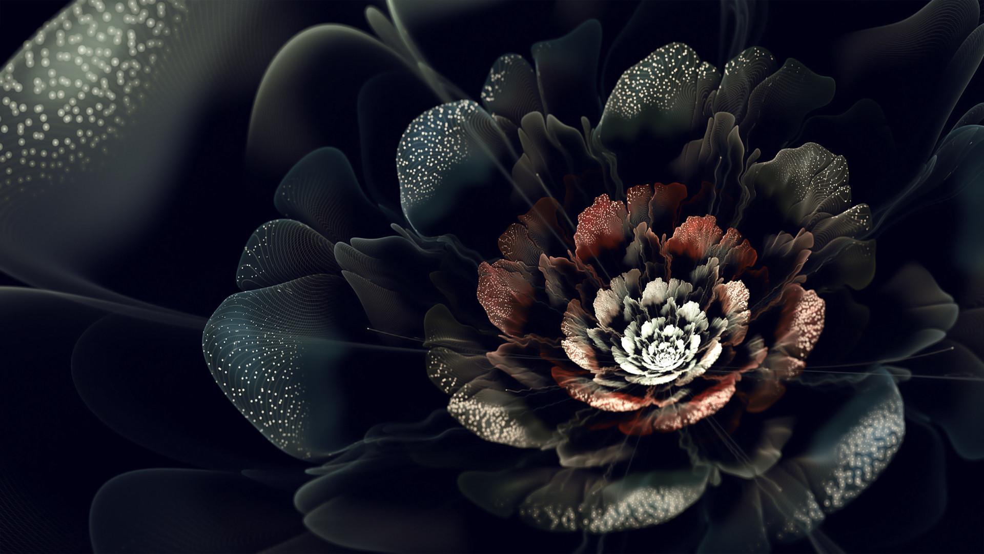 Black Rose Flower Wallpaper Find best latest Black Rose Flower Wallpaper  for your PC desktop background