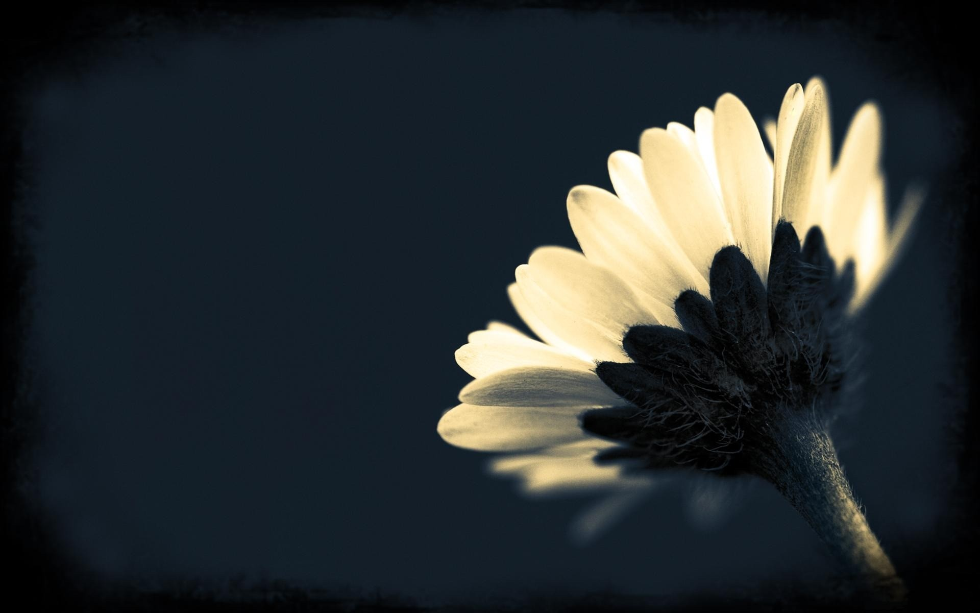 Floral Wallpaper With Black Background 39 Free Hd Wallpaper. Floral  Wallpaper With Black Background 39 Free Hd Wallpaper