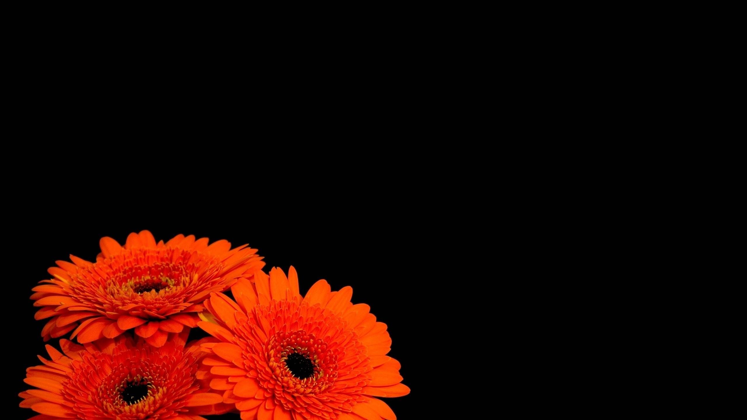 Description: Download Flowers black background orange flowers wallpaper/desktop  background in HD & Widescreen resolution.