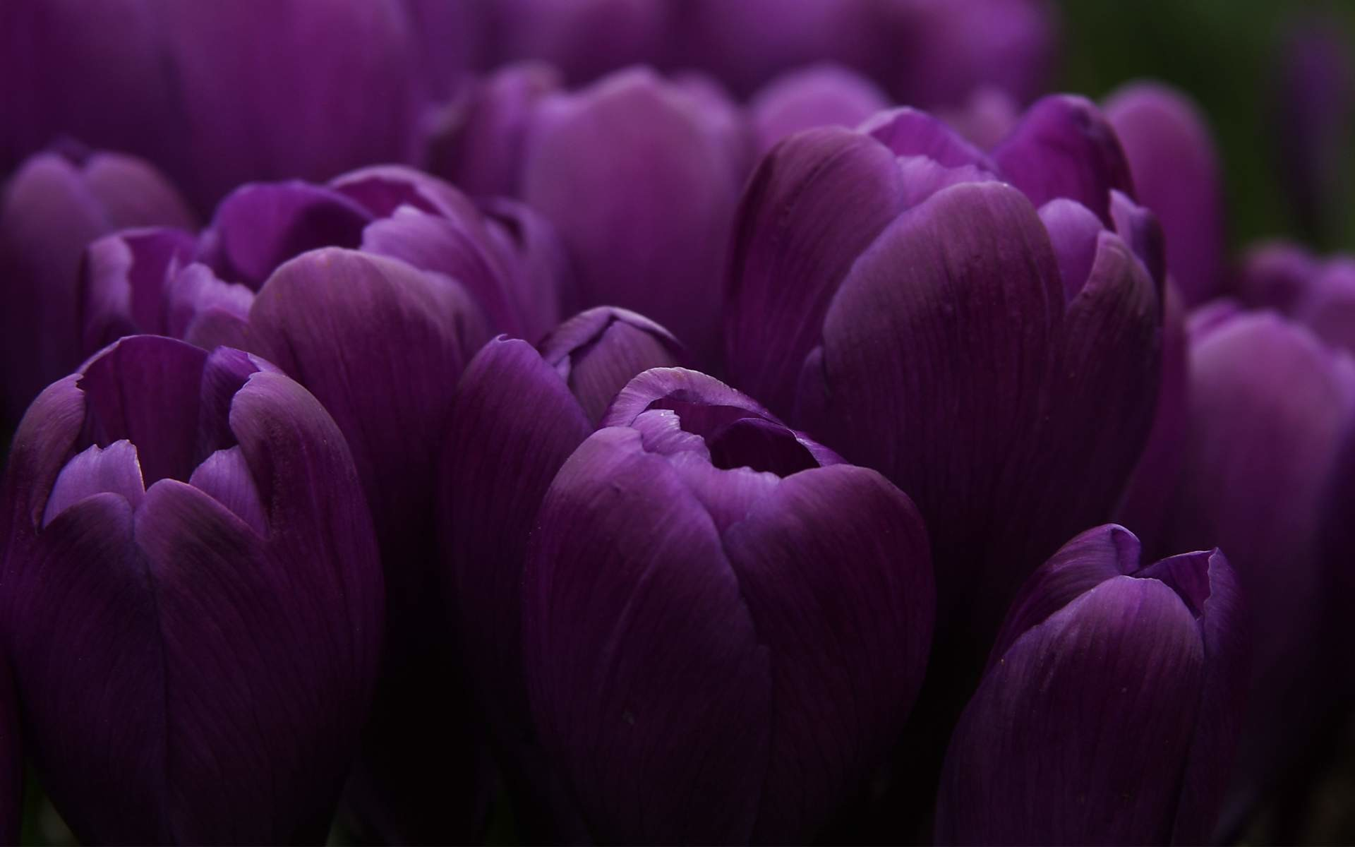 Wallpapers For > Purple Flower Black Background