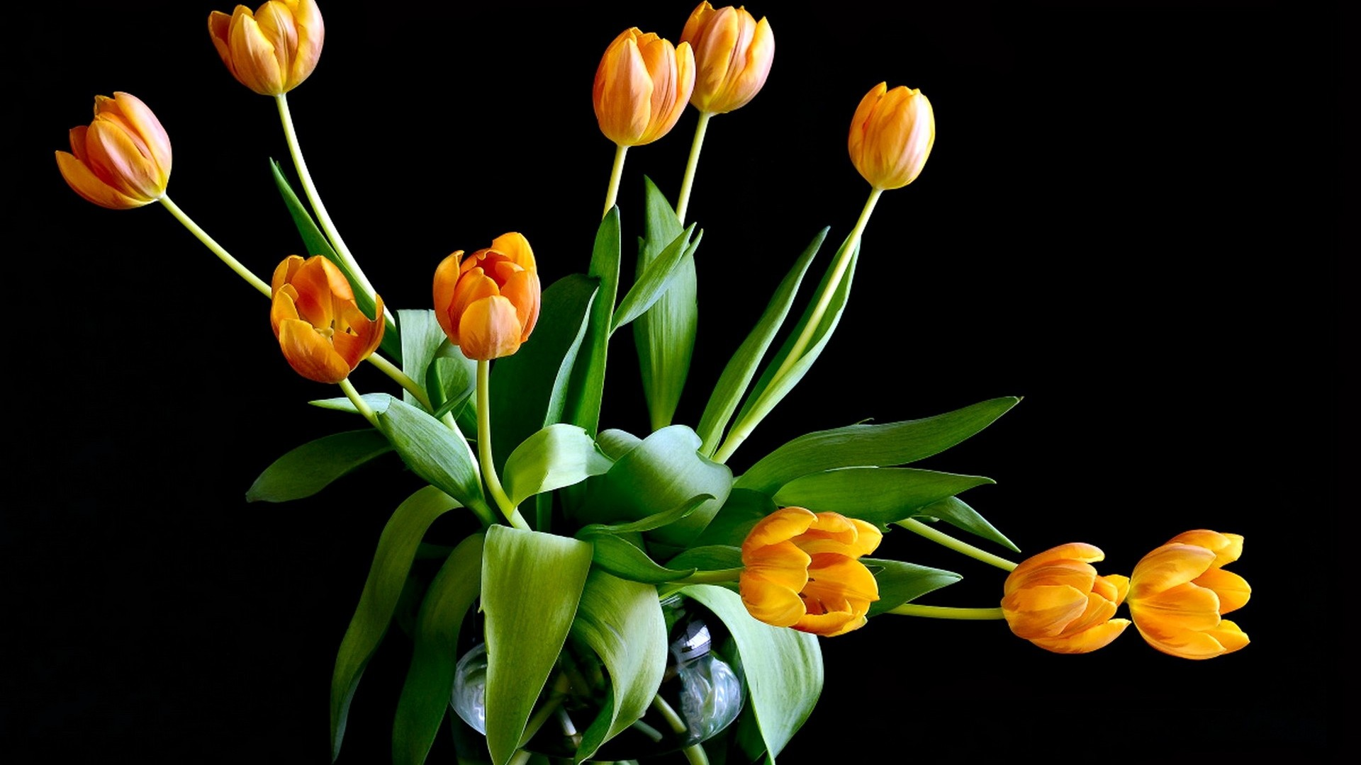 Get the latest tulips, flowers, leaves news, pictures and videos and learn  all about tulips, flowers, leaves from wallpapers4u.org, your wallpaper  news …