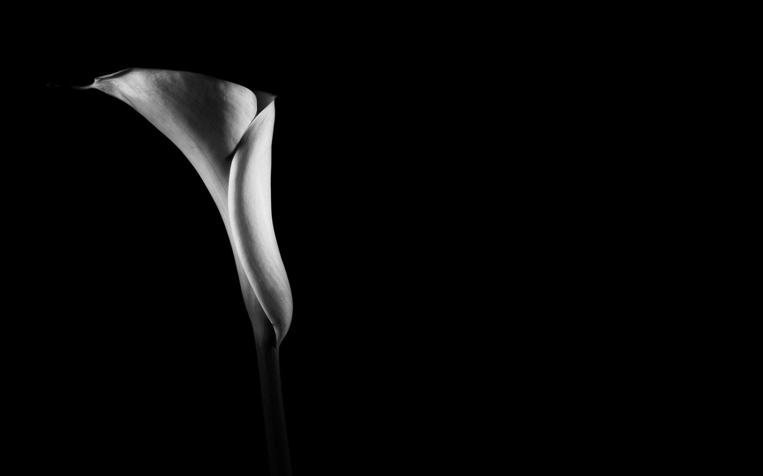 Photo black and white flower wallpaper.