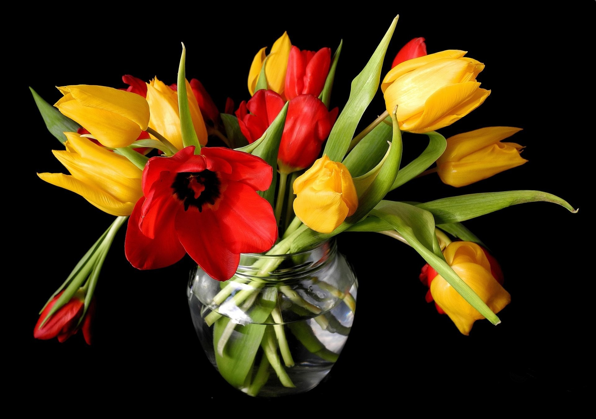 spring tulips yellow red vase flower buds black background