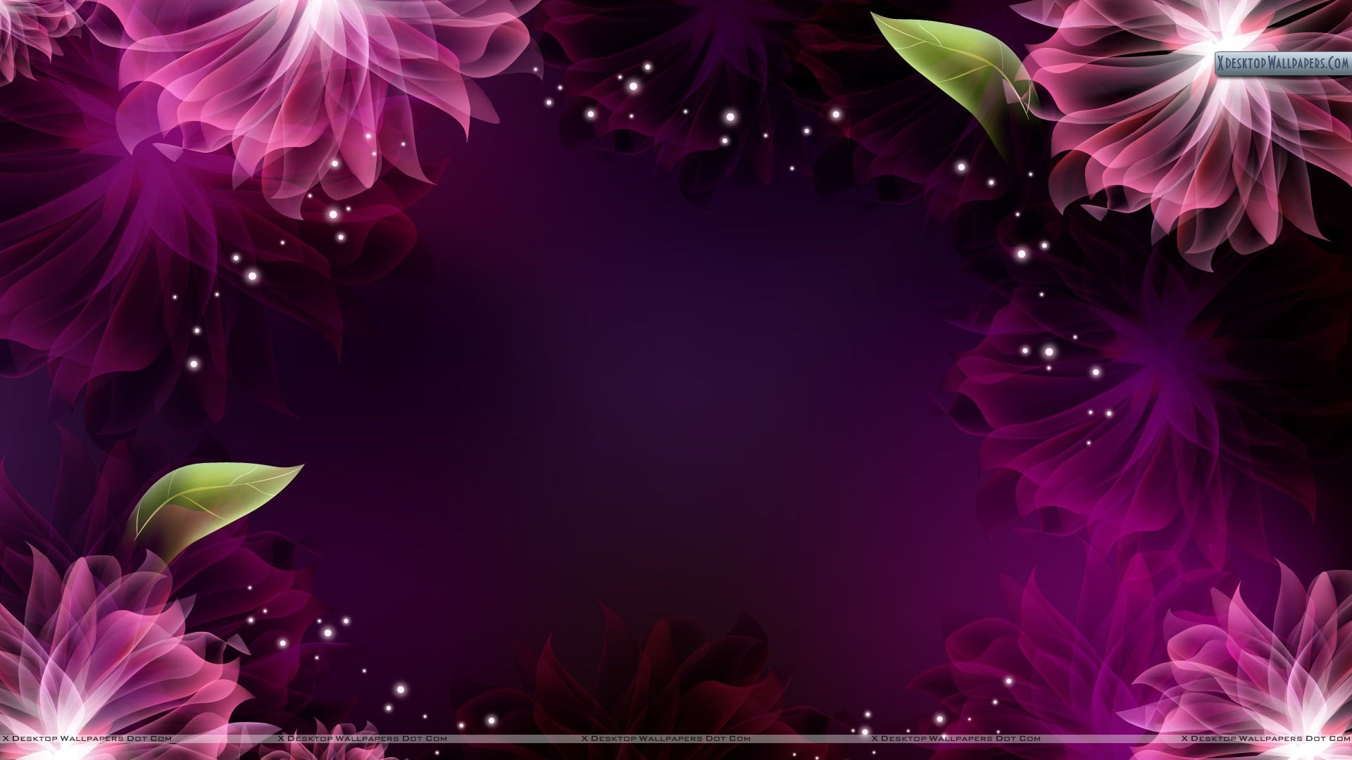 Flowers on Black Background Wallpaper Wide Wallpaper