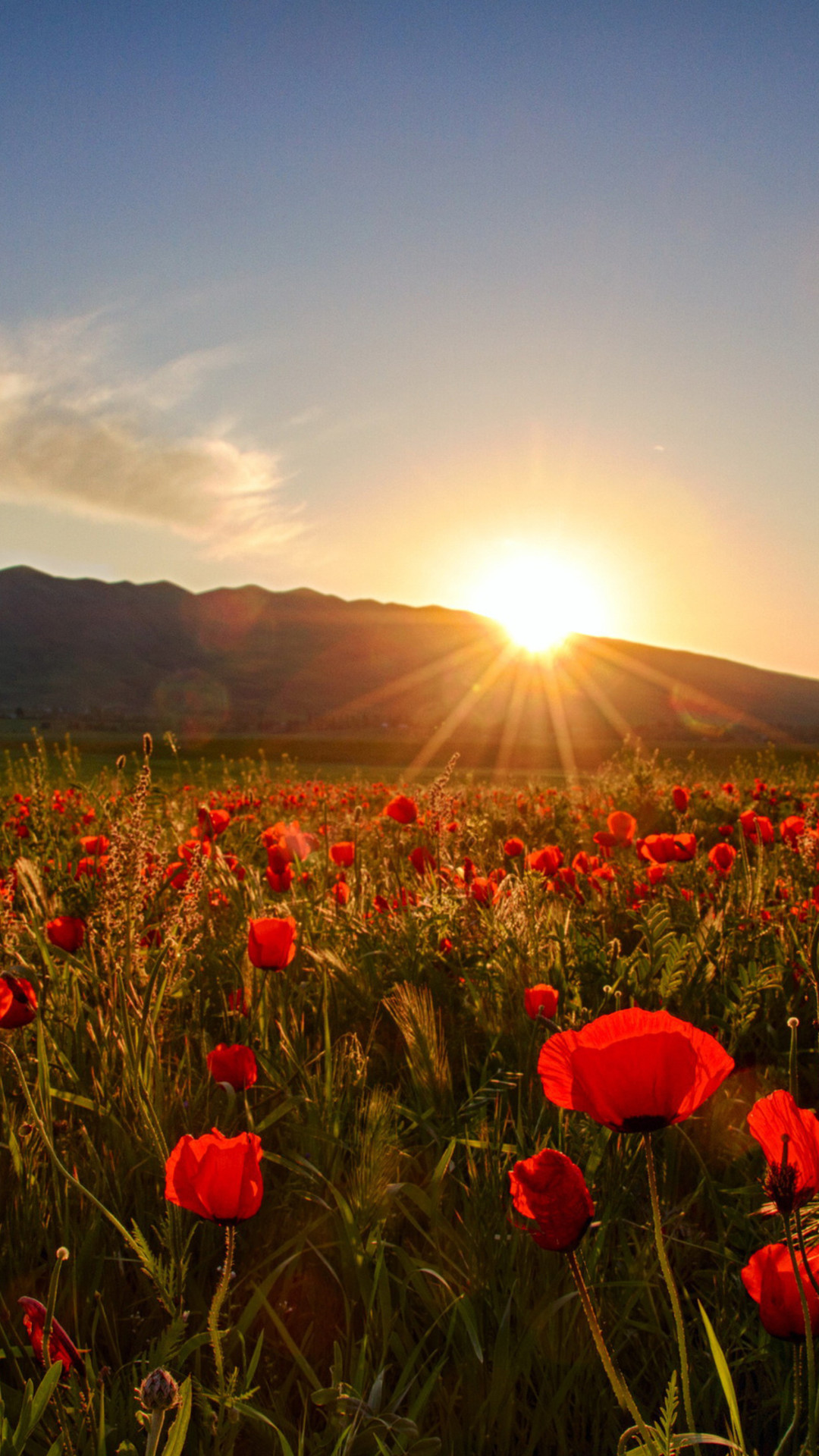 Wallpaper Download Sunset, field with poppies and hills, HD  Wallpaper, Download free