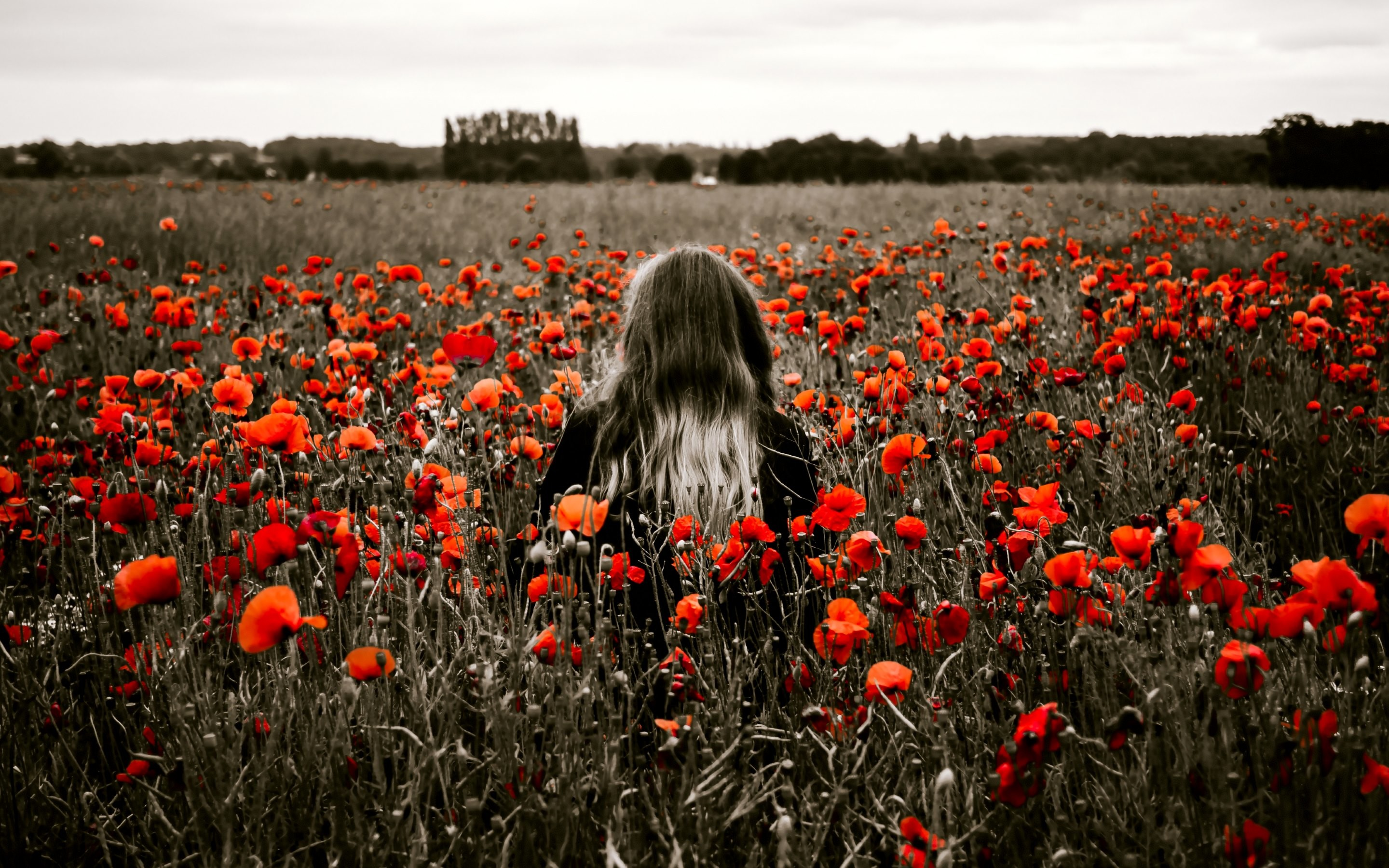 4K HD Wallpaper: Girl in the Field with Red Poppies