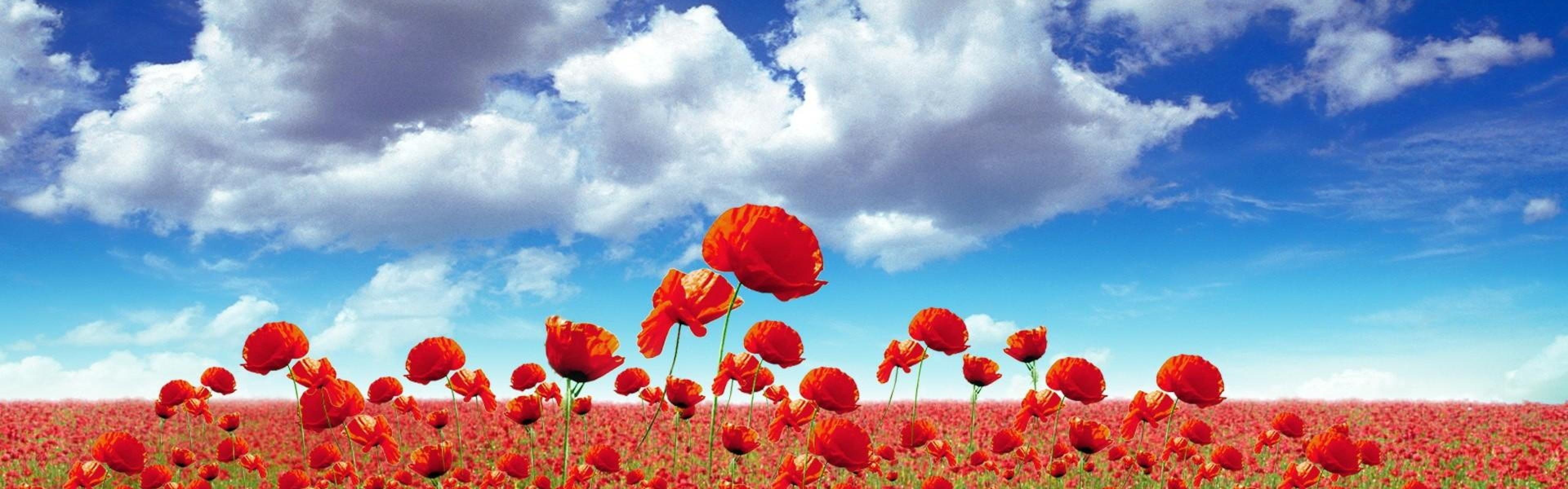 Wallpaper poppies, field, sky, clouds, light