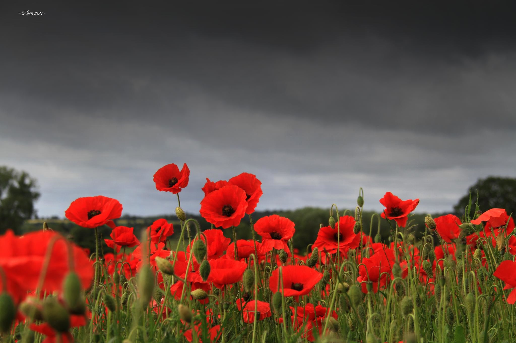 Remembrance Day Wallpapers Wallpaper 2048×1365