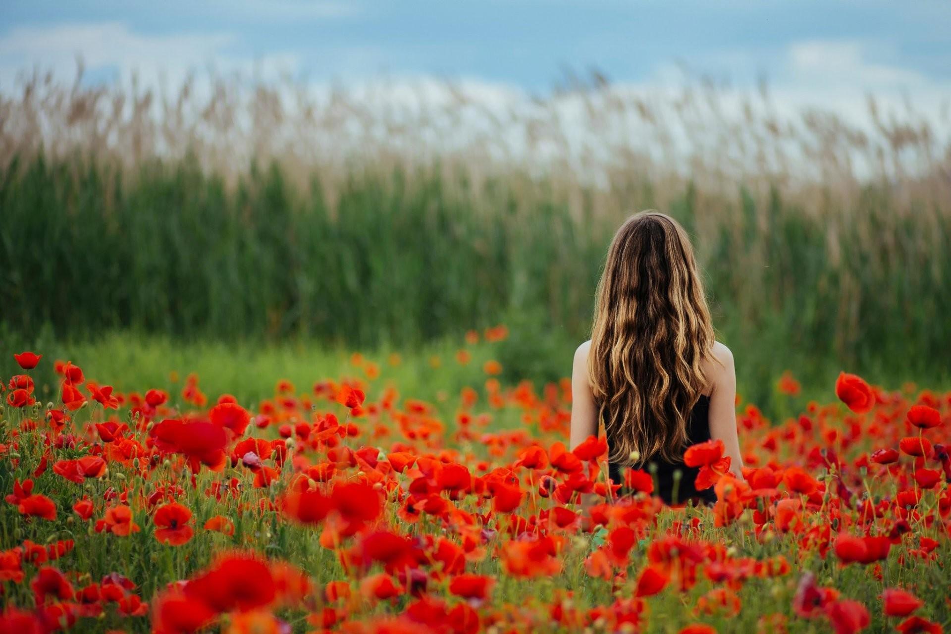 poppies the field flower girl