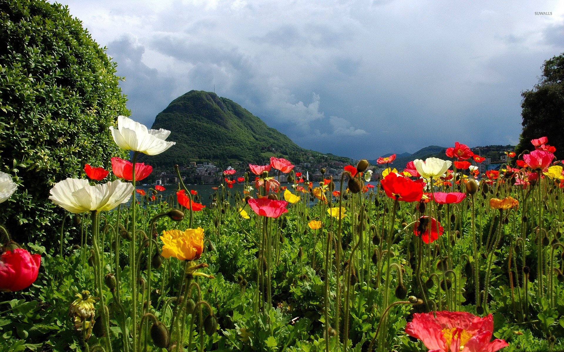 Lovely poppy field by the lake wallpaper jpg