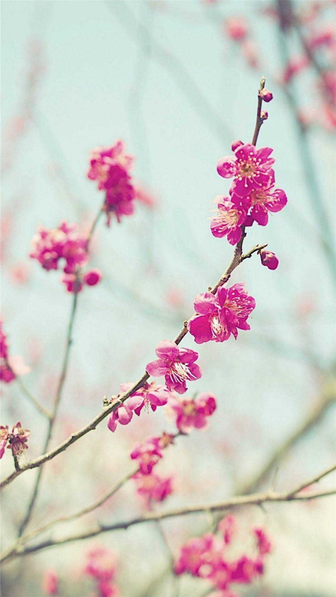 Peach Blossom Spring Nature Branch iPhone 6 wallpaper