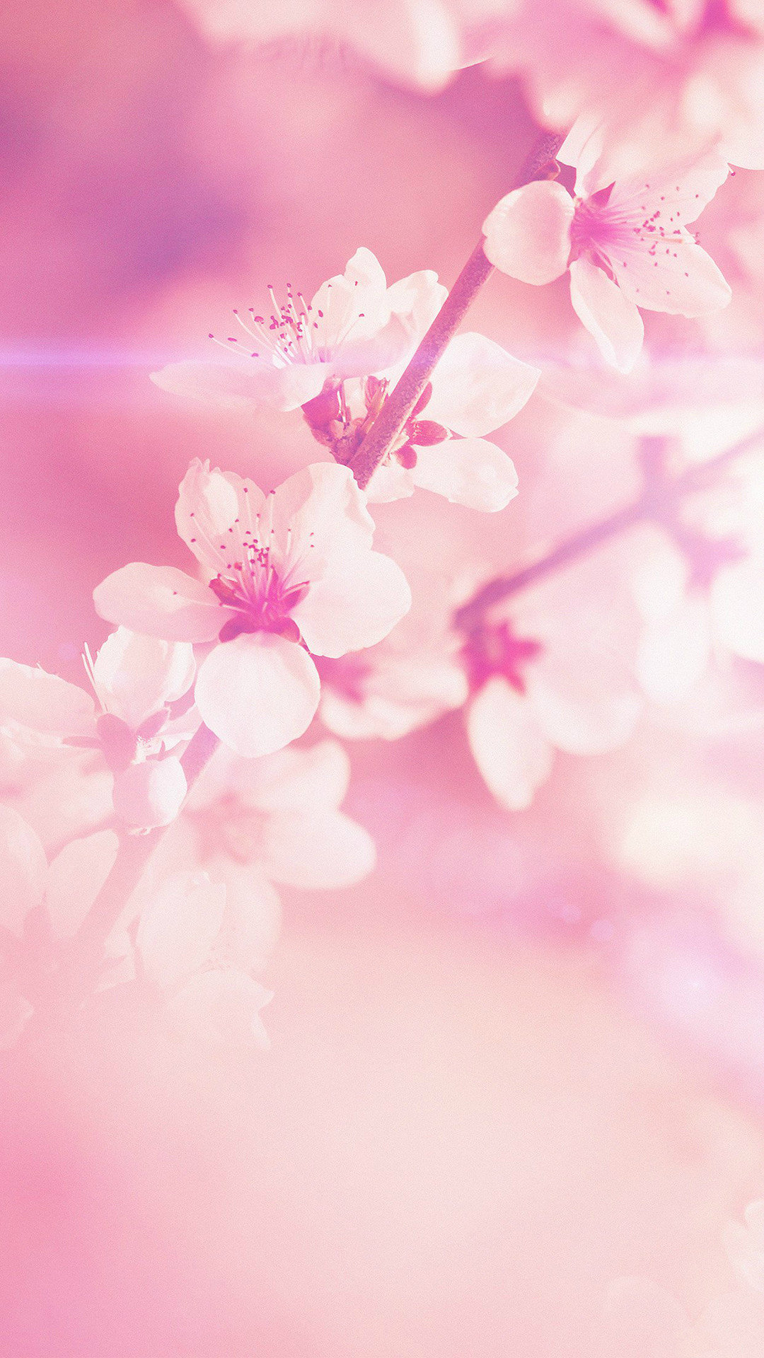Spring Flower Pink Cherry Blossom Flare Nature iPhone 6 wallpaper