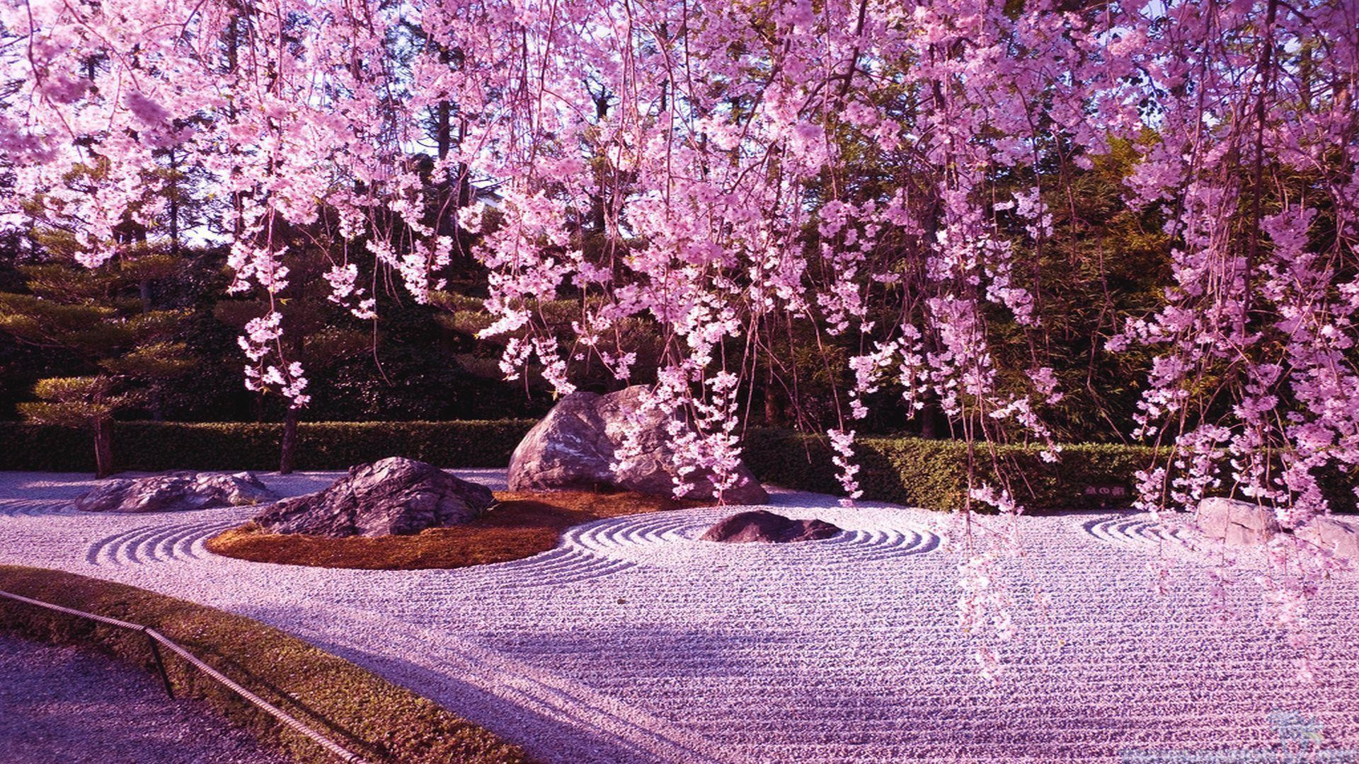 <b>Cherry Blossoms</b> iPhone <b>Wallpaper</