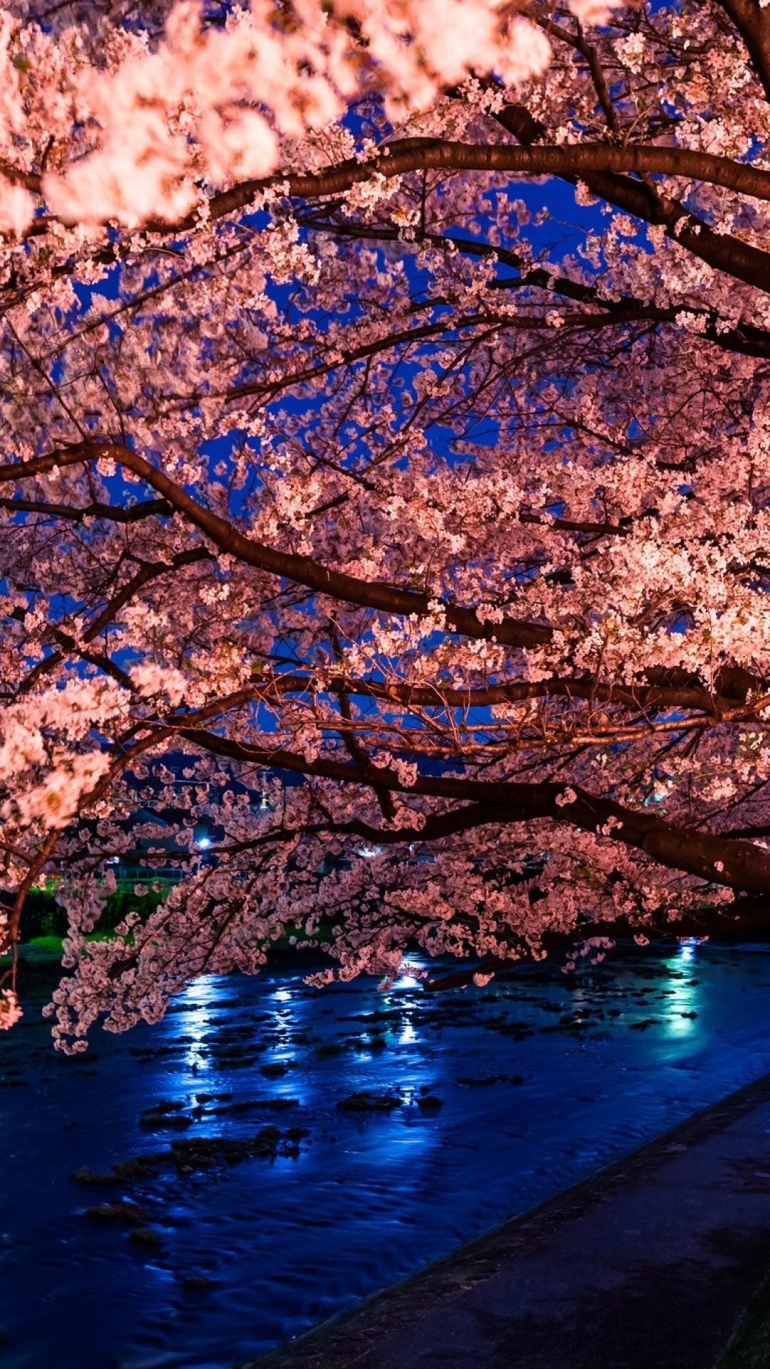 Cherry Blossom, River, Night