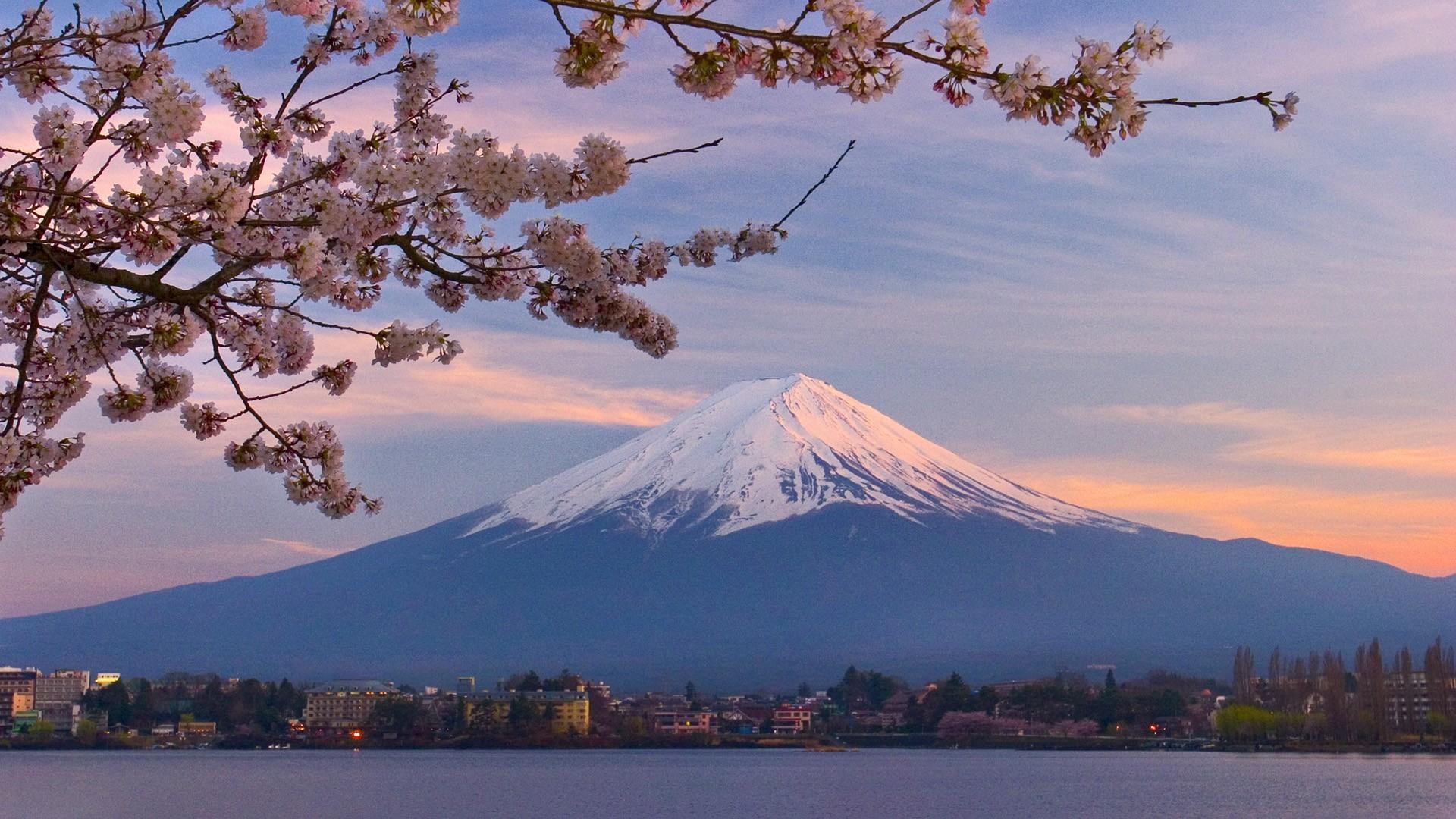 Mount Fuji Cherry Blossom Wallpaper