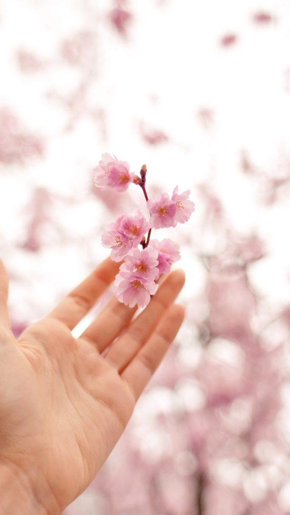 spring cherry blossom bokeh nature iphone 7 wallpaper