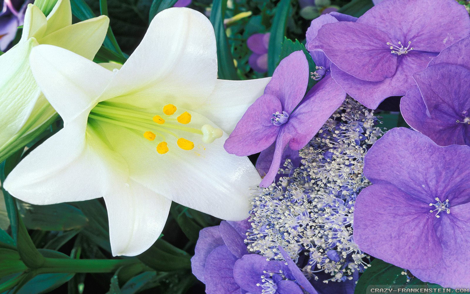 Wallpaper: Hydrangea and Easter lily. Resolution: 1024×768 | 1280×1024 |  1600×1200. Widescreen Res: 1440×900 | 1680×1050 | 1920×1200