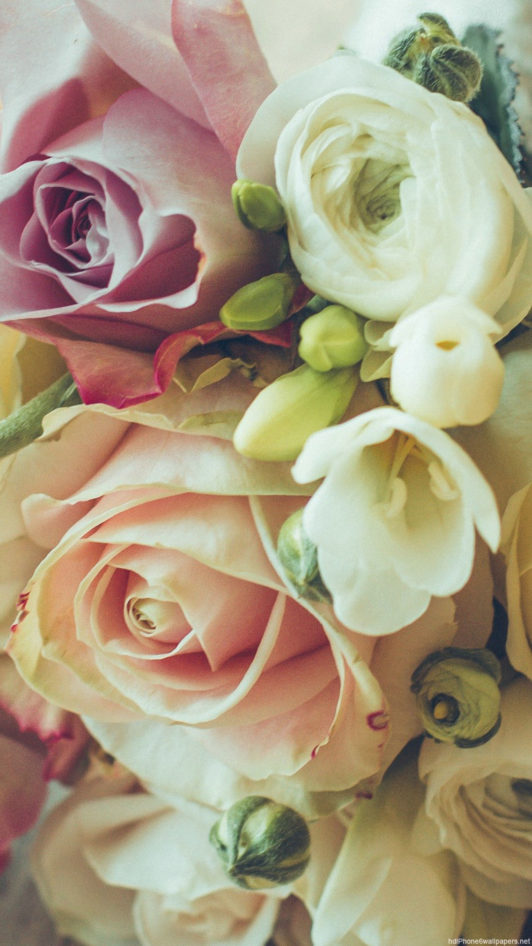 HD design rose bouquet iphone 6 wallpaper