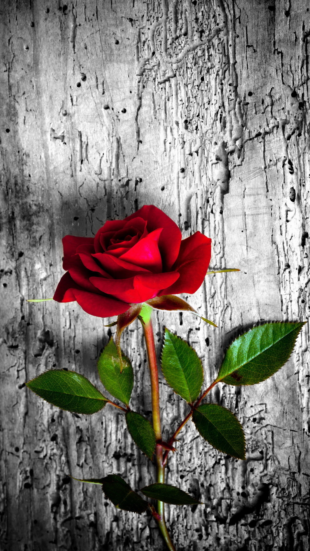 Red rose. 26 Happy Valentine's Day Roses/flowers Wallpapers for iPhone –  @mobile9