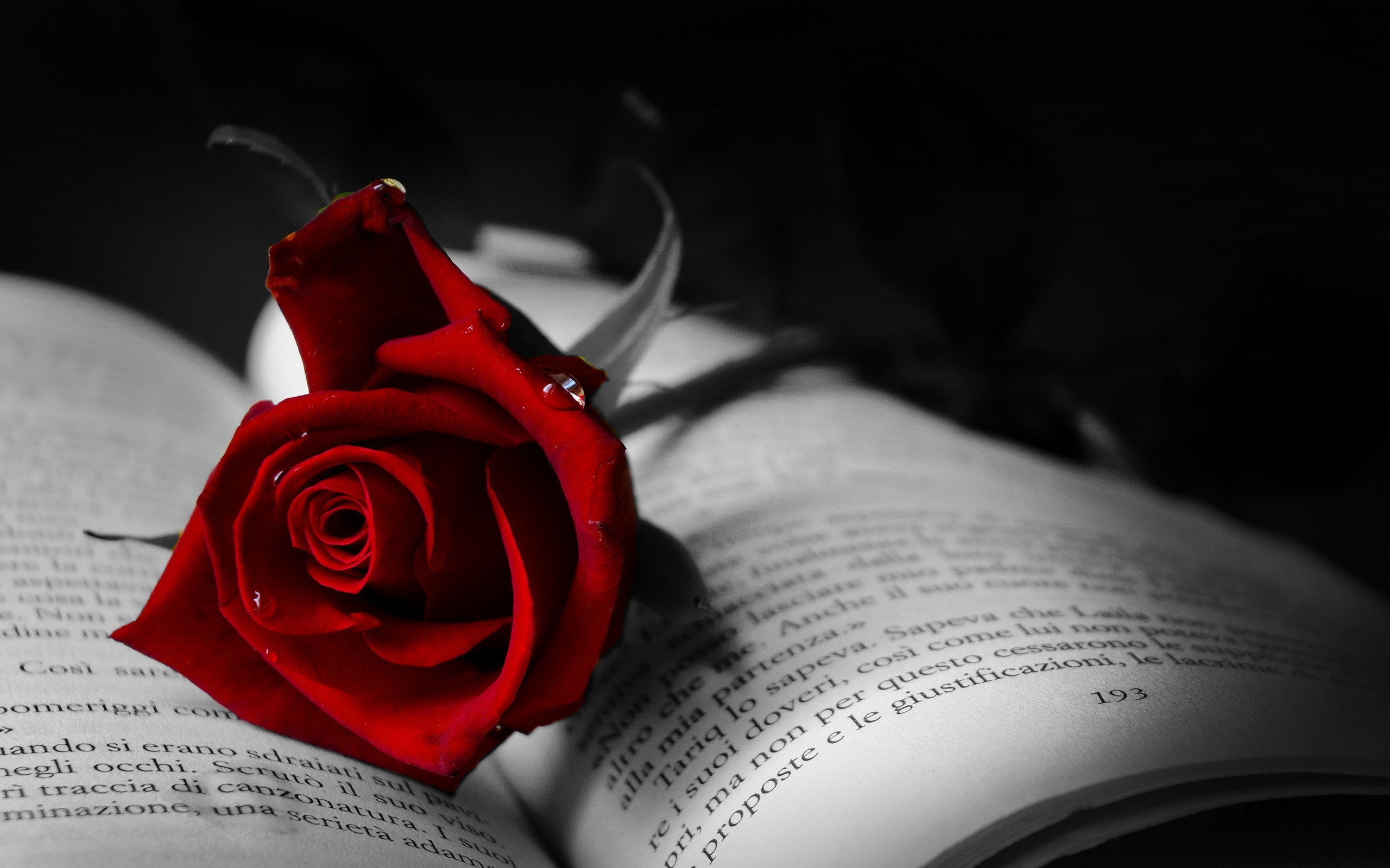 Book with red rose wallpaper