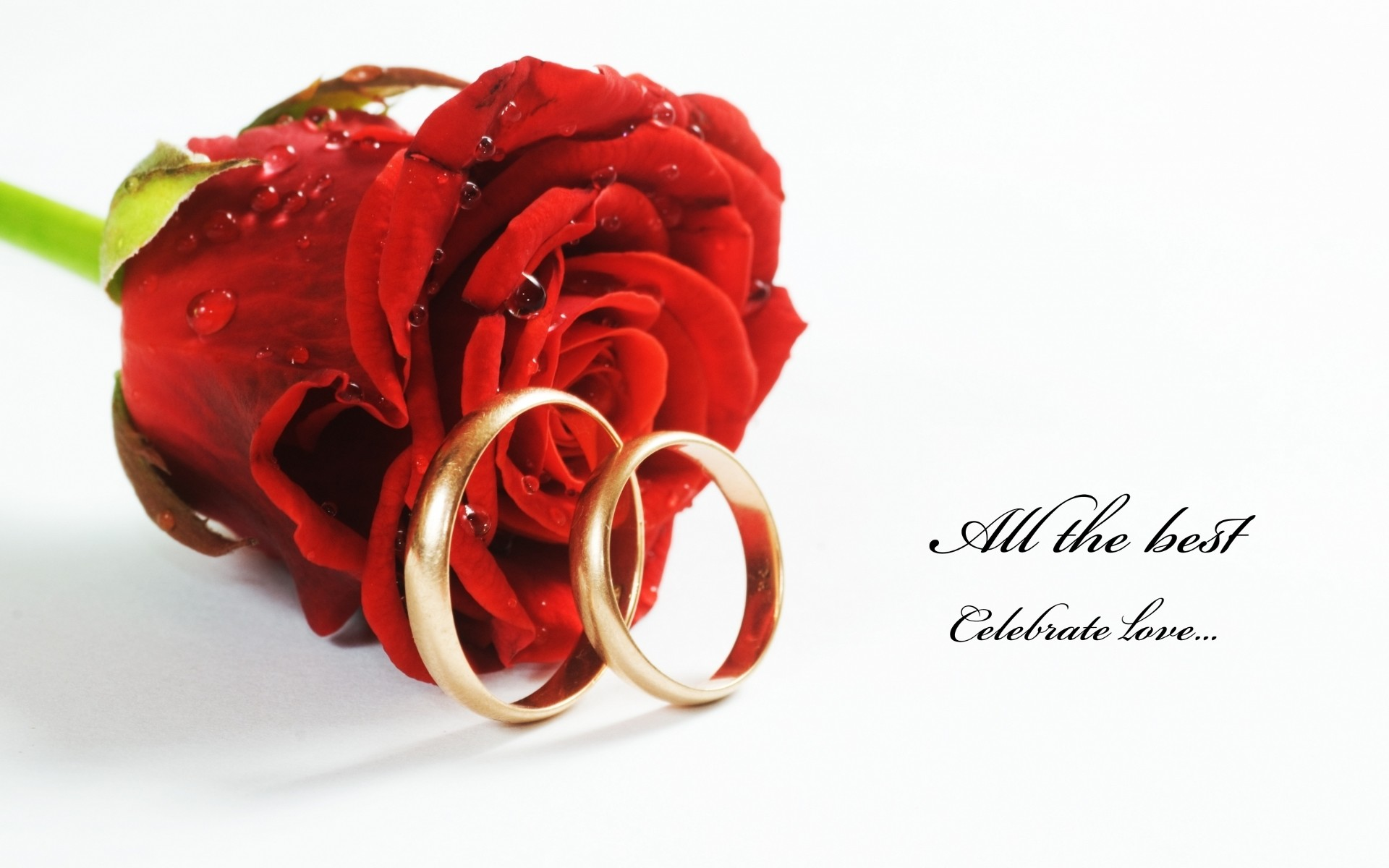 … nice-red-roses-with-rings-hd-free-wallpapers …