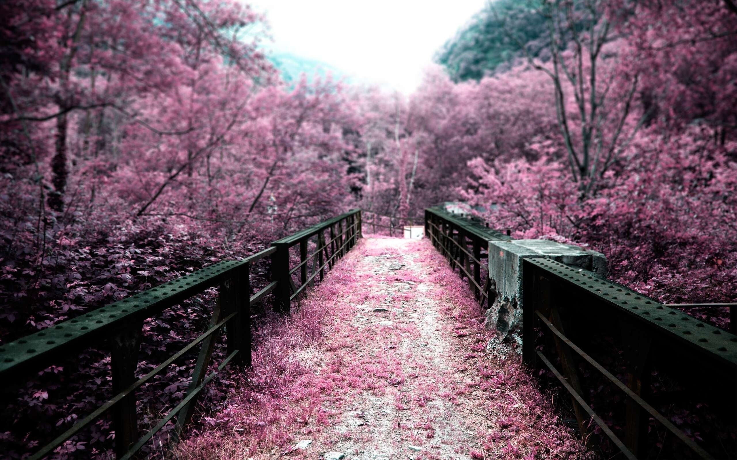 Cherry blossoms on a bridge hd wallpaper background Â« HD Wallpapers