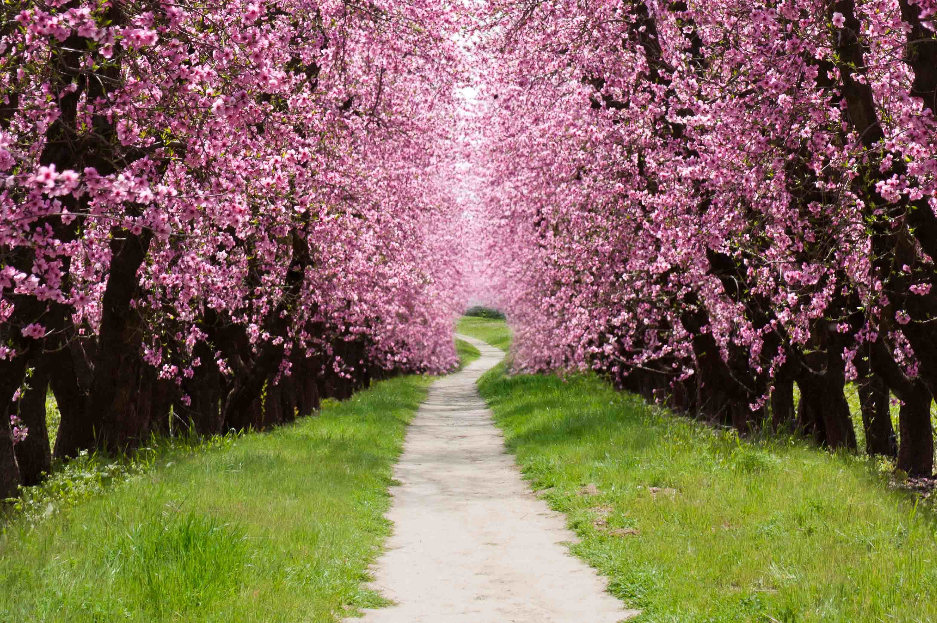 Within my imagination is a rich place filled with great halls made of  blooming cherry trees