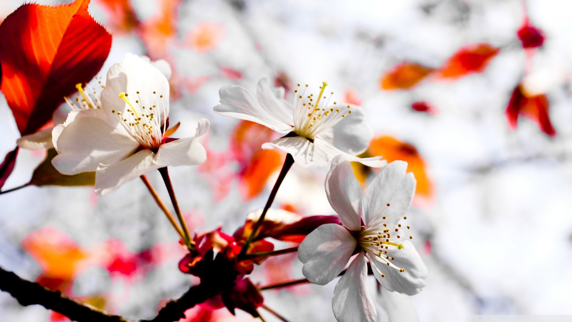 April-Spring-Flowers-Desktop-Wallpaper