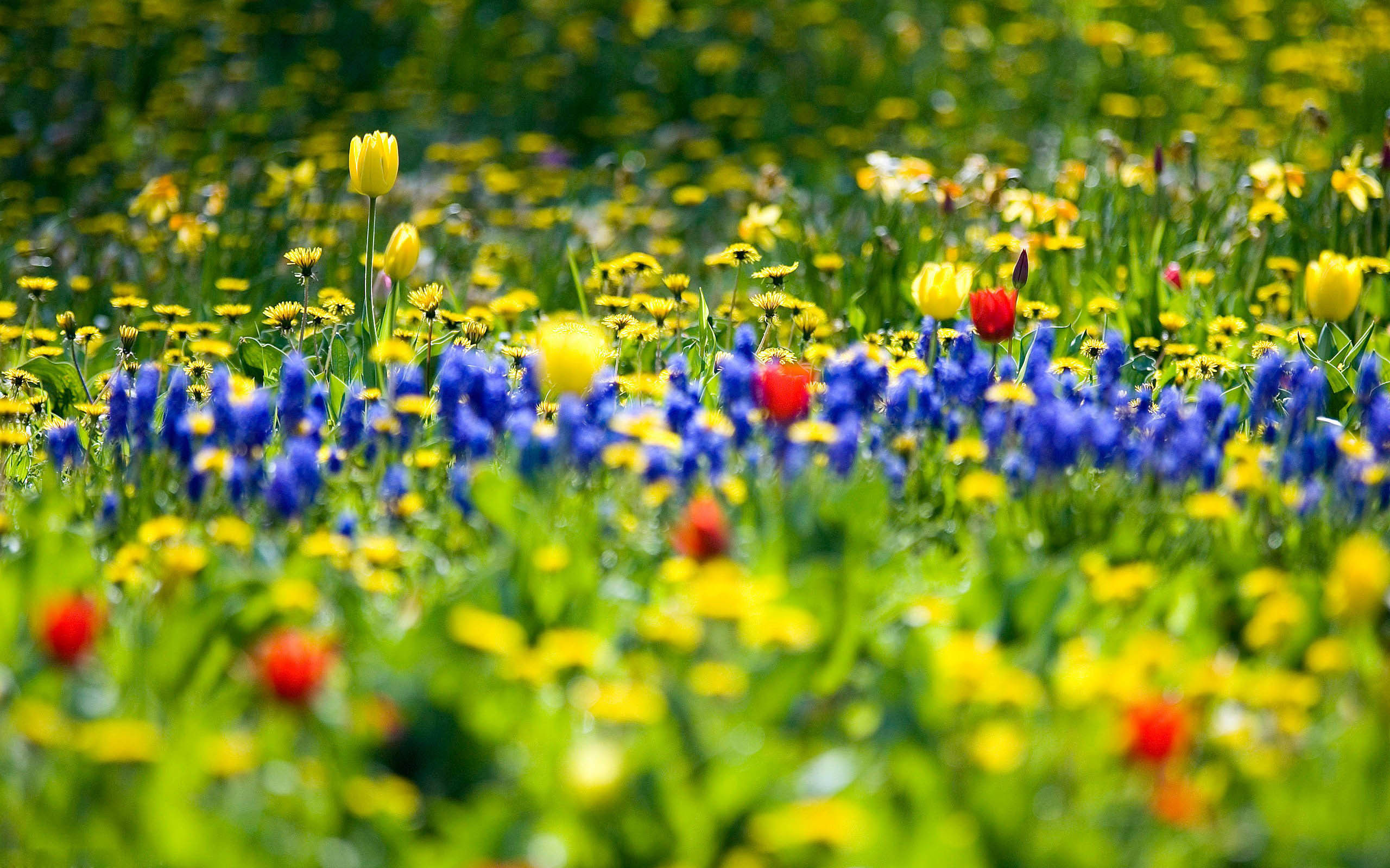 Many Brilliant Flowers Awesome Wallpaper. Full Resolution:2560x1600px …