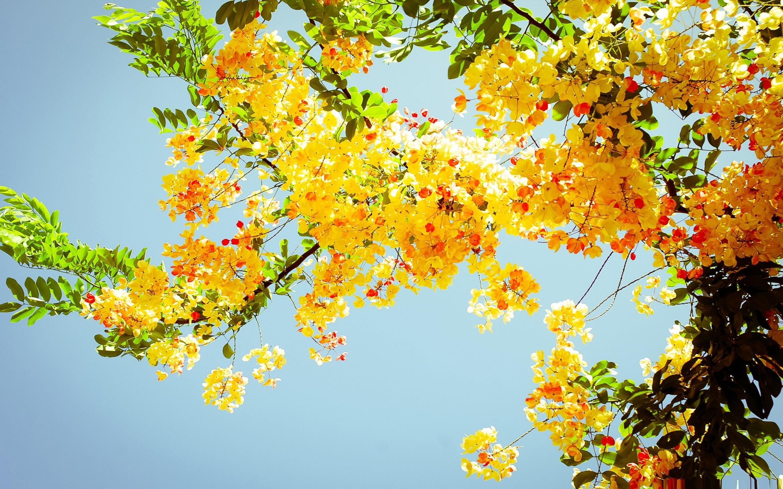 Beautiful Flowers Wallpaper Beautiful Flowers Wallpaper …