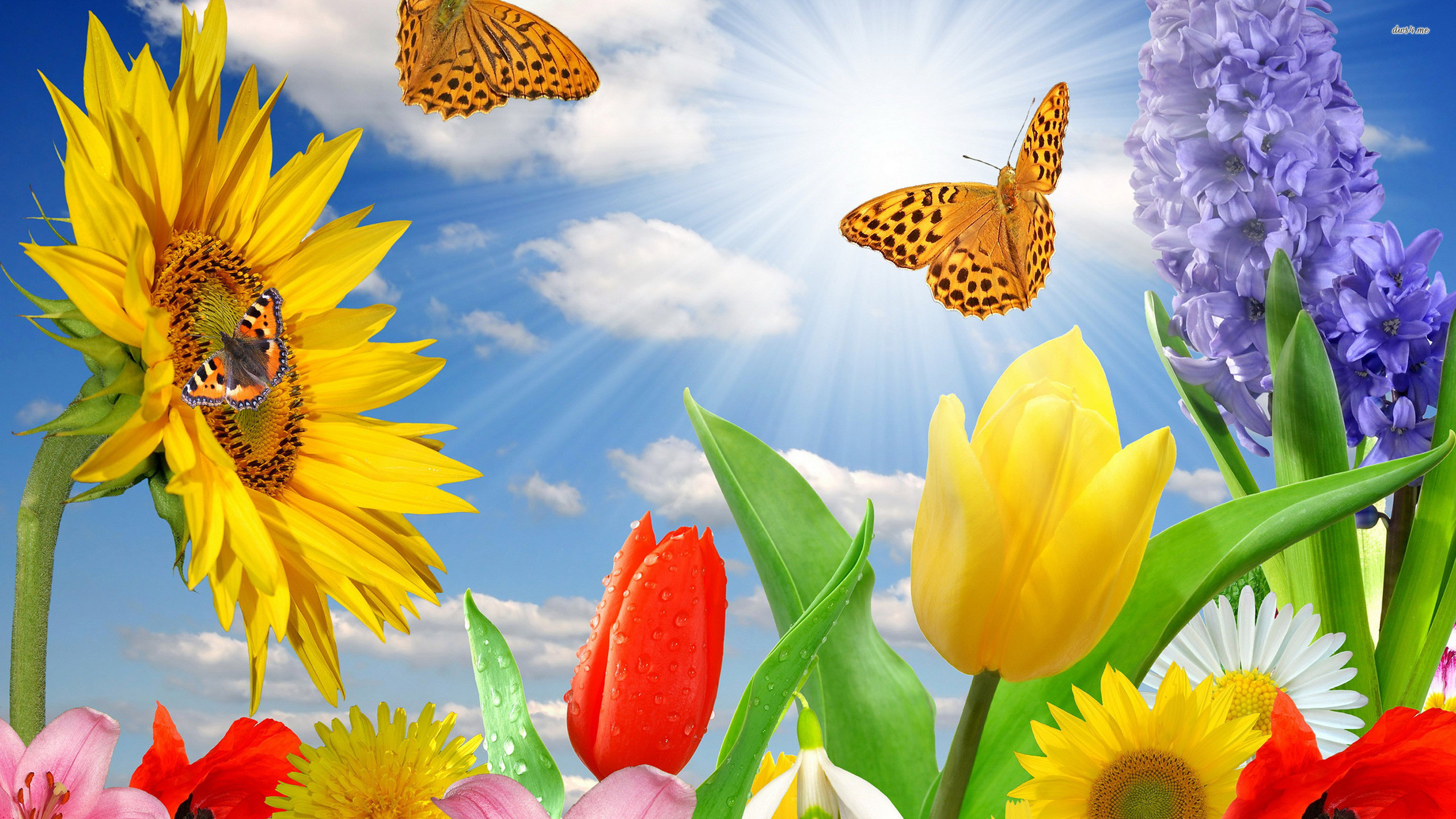 … Daisy and Butterfly wallpaper | wallpaper free download