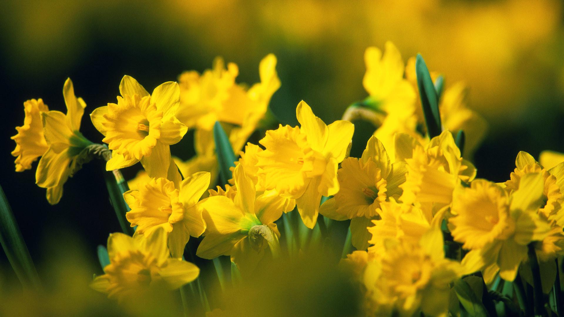 Gorgeous Yellow Flowers Wallpaper