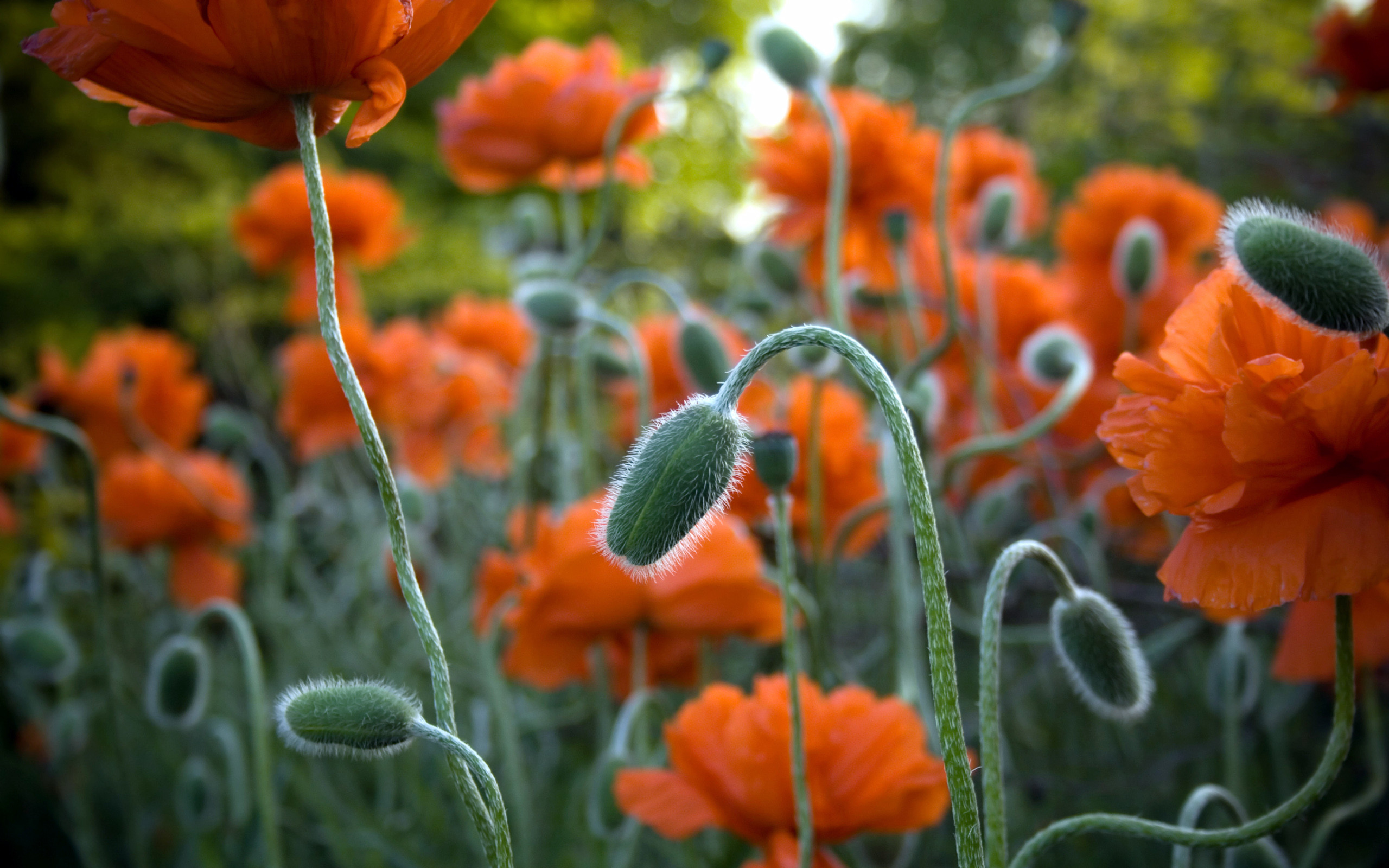 Jackson Park Flowers
