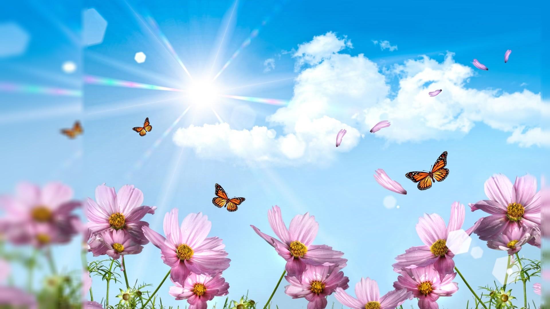 1920×1080-free-summer-desktop-wallpaper-1508645640