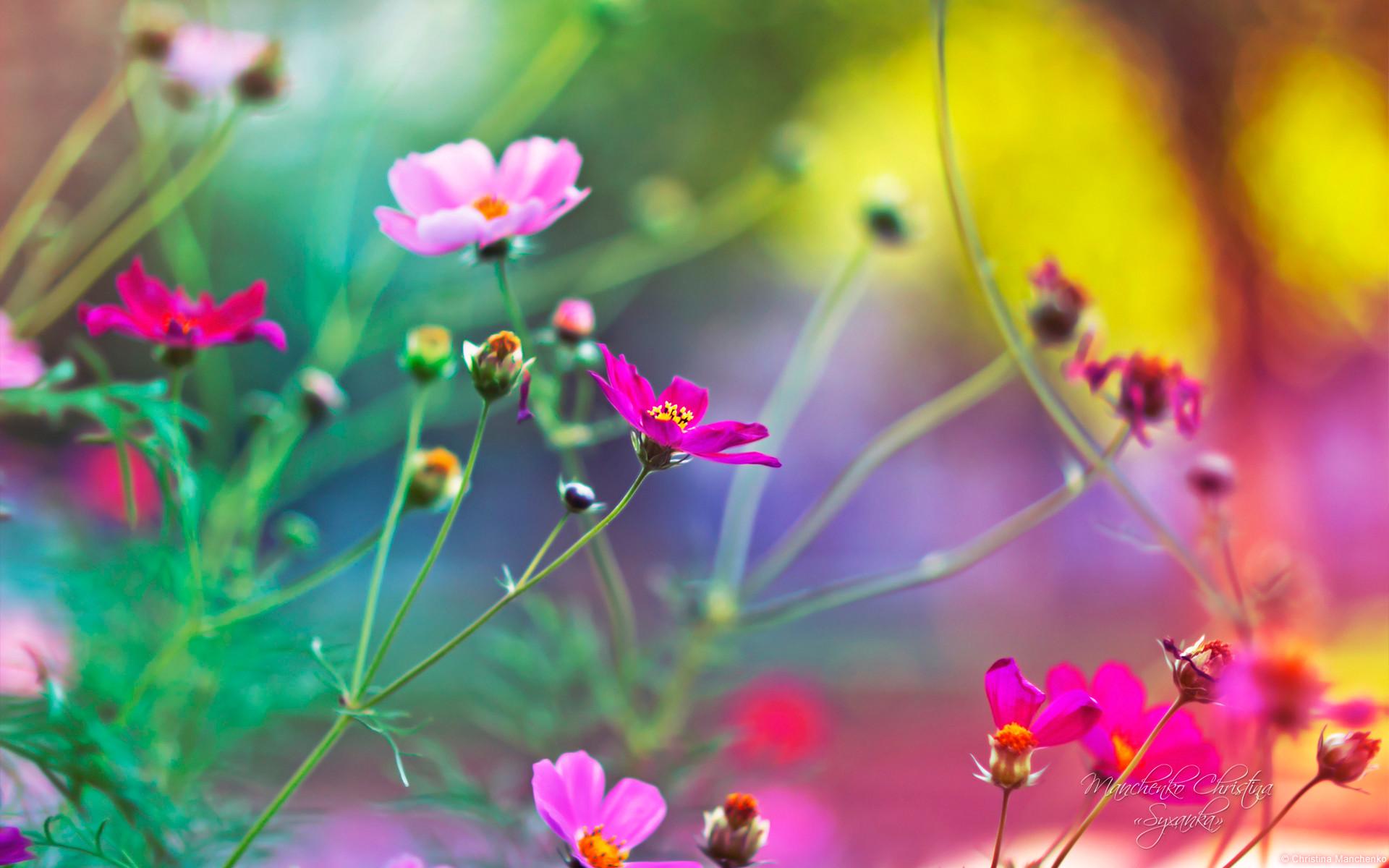 An excellent flower wallpaper for Windows 8
