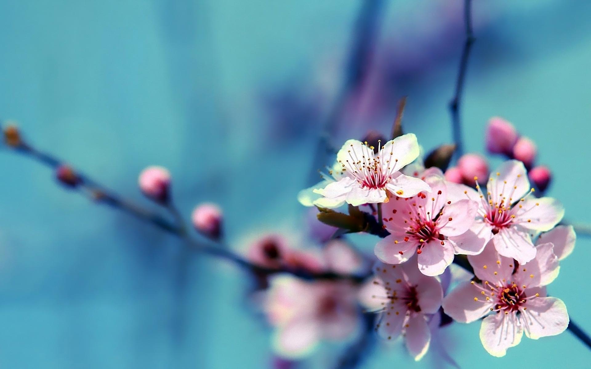 … HD-Beautiful-Flowers-Wallpapers-1 …