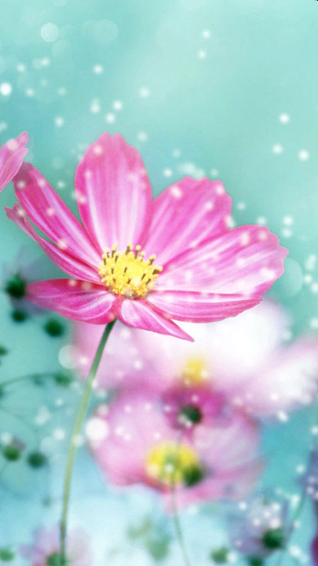 Spring Flower iPhone 6 Wallpaper HD