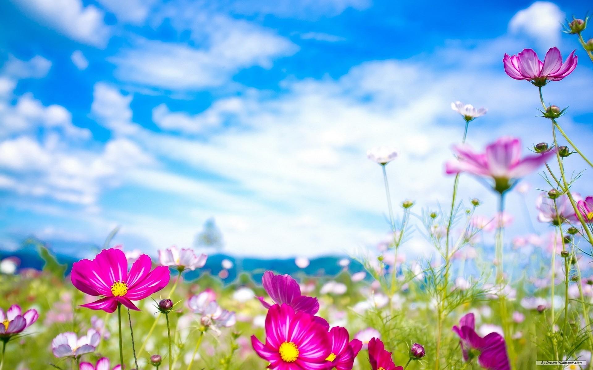 spring-flowers-wallpaper3-600×375