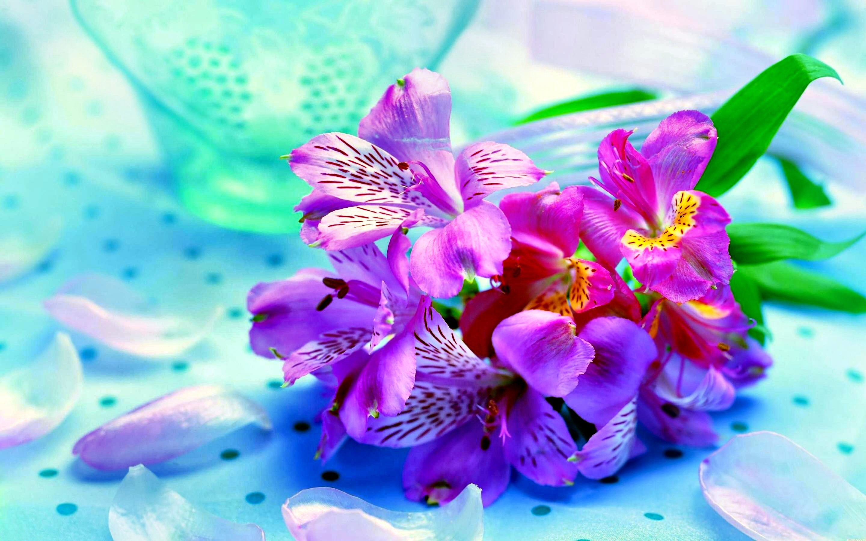 HD Flower, April 15, 2016 | Wallpapers PC Gallery, 459.21 Kb