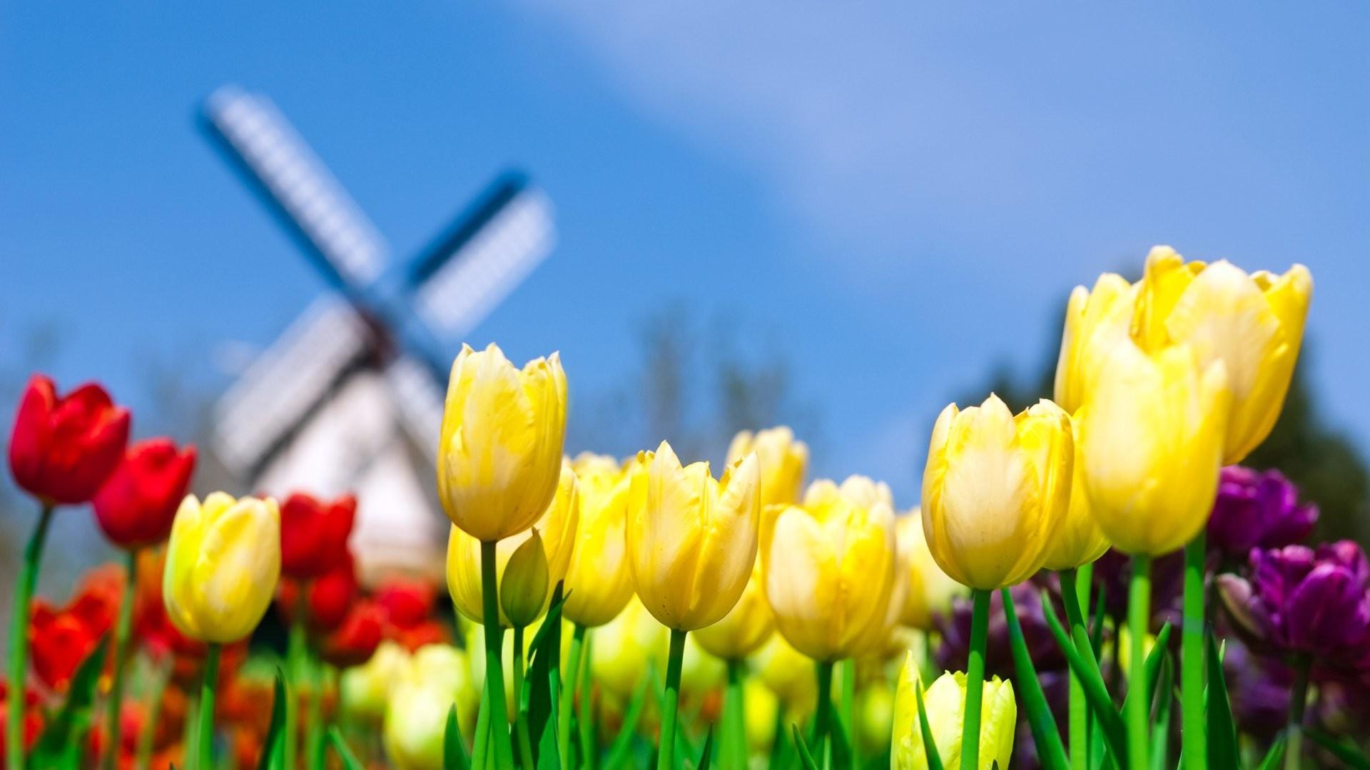 Spring flowers wallpapers HD PixelsTalk.Net