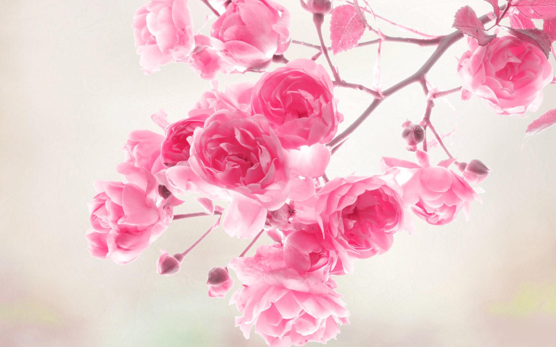 40 Beautiful Flower Wallpapers for your desktop